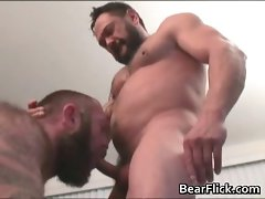 Hirsute gay bear cock sucking sex with Brent part6